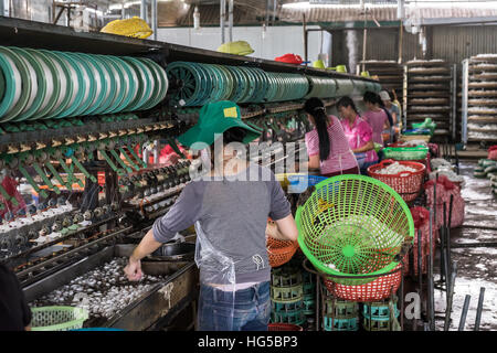 Silk factory workers soaking cocoons to release the silk thread, - Stock Photo