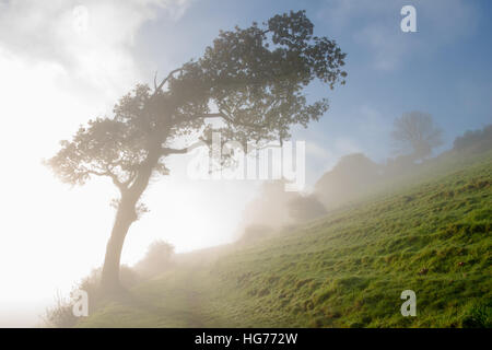 Atmospheric landscape of mist rising on a sunny autumnal morning with windswept hillside trees earliy showing through - Stock Photo