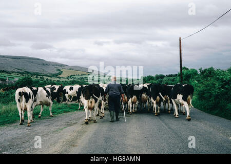 Rear view of farmer with cows walking on road against cloudy sky - Stock Photo