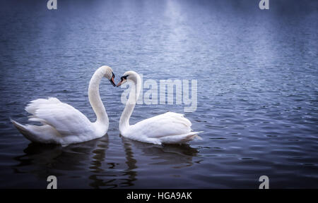Swans in Serpentine Hyde park, forming a heart shape with their necks - Stock Photo