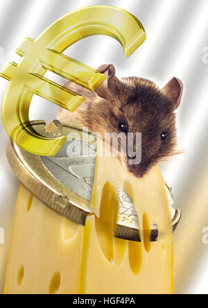 Mouse nibbling on cheese with one-euro coin and euro symbol, Composing shot - Stock Photo