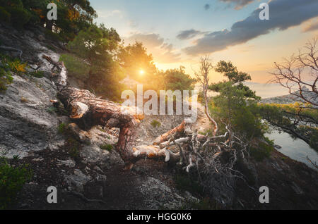 Fallen old tree in mountains at colorful sunrise. Landscape with trees, trail, mountain, sea, and sunny sky. Mountain - Stock Photo