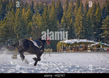 Black Horse galloping on snow - Stock Photo