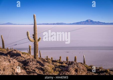 View from Isla Incahuasi, Uyuni, Bolivia - Stock Photo