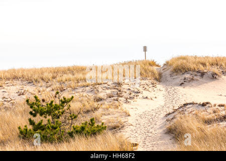 a simple trail leading to the ocean beach through the dunes - Stock Photo