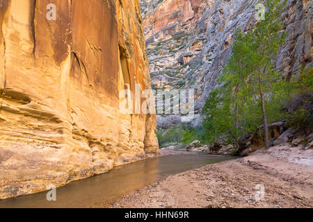 The Escalante River flowing past large sandstone cliffs and cottonwood trees. Grand Staircase-Escalante National - Stock Photo