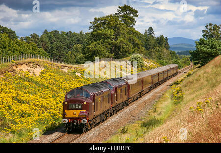 'The Royal Scotsman' worked by Class 37 diesel locomotives 37261 and 37197. Kincraig, Highlands, Scotland, UK. - Stock Photo