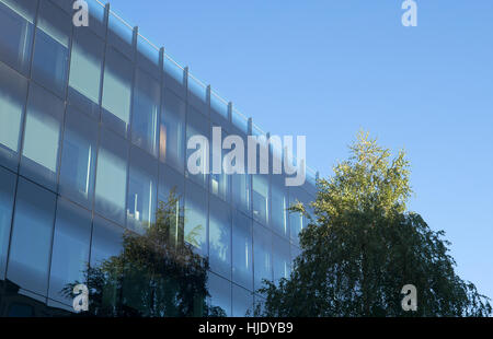 Leafy tree and blue sky reflected in glass walled building - Stock Photo