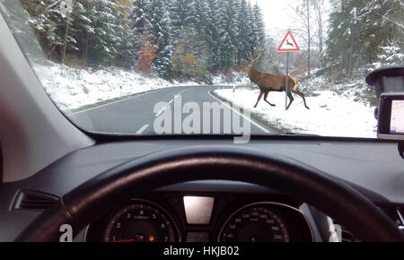 Deer crossing a road, view through car windshield, Germany - Stock Photo