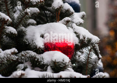 Snow covered natural spruce tree decorated for Christmas with red and blue glass ornament balls.  Winter and Christmas - Stock Photo