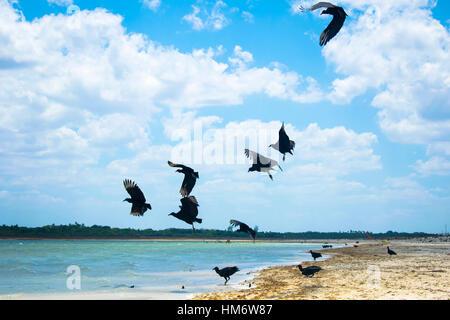 Birds flying over beach against cloudy sky - Stock Photo