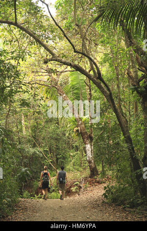 Tourists on Forest Trail, Lowland Rainforest, Manuel Antonio National Park, Costa Rica. - Stock Photo
