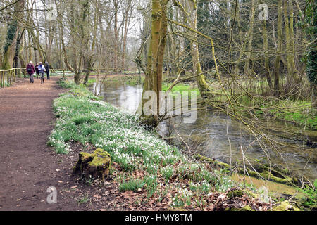 People walking around a snowdrop woods next to stream in Welford park estate, near Newbury, England - Stock Photo