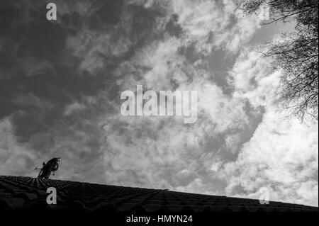 Kristina (24) works on a roof in Viimsi, near Tallinn 10th October 2016. There are 4 female chimney sweepers in - Stock Photo