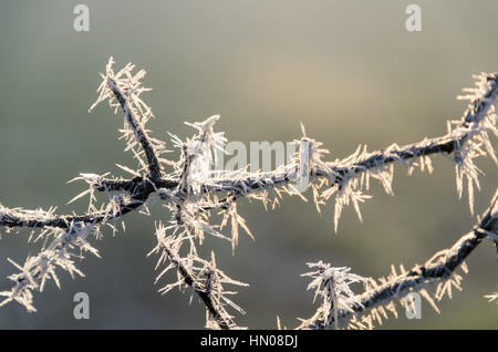 Frozen branches in sunlight, Munich, Germany - Stock Photo