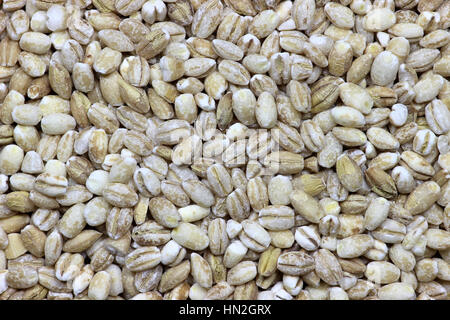 barley grains for background use - Stock Photo