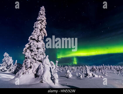 Winter night in Finnish Lapland - Stock Photo