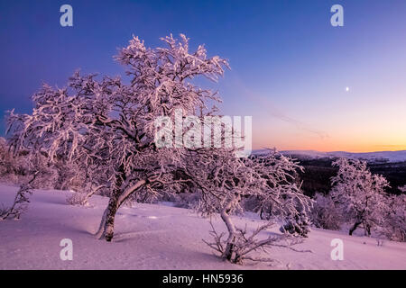Winter evening in Finnish Lapland - Stock Photo