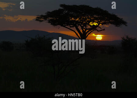 Sunset in the Serengeti National Park, Tanzania, Central Africa - Stock Photo
