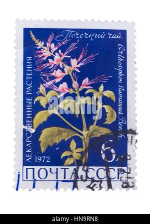 USSR - CIRCA 1972: A Stamp printed in  shows the Orthosiphon - Stock Photo