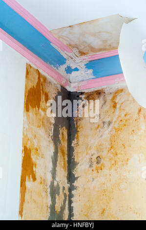 3 of 5 - Reparing damage caused to ceiling, plaster cornice & wallpaper by water from a leaking roof. Search UIDIY1 - Stock Photo