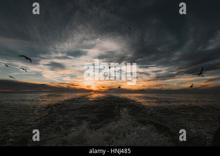 Birds flying over sea against cloudy sky during sunset - Stock Photo