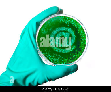 A scientist holding a petri dish with germs in the shape of an at symbol.(series) - Stock Photo