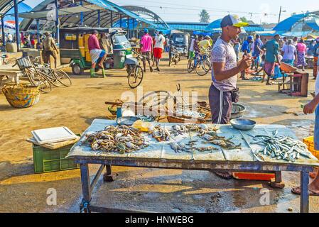 NEGOMBO, SRI LANKA - NOVEMBER 25, 2016: The tiny stall at the Main Fish Market offers crabs and anchovies, on November - Stock Photo