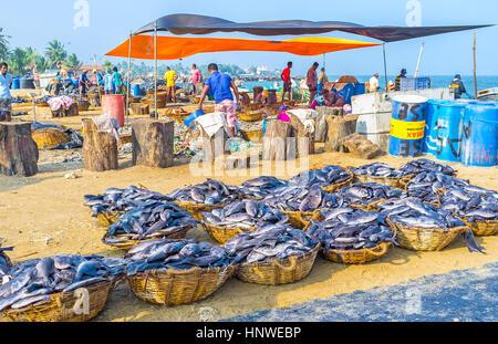 NEGOMBO, SRI LANKA - NOVEMBER 25, 2016: The fishing port has area for fish processing - here locate the cutting - Stock Photo