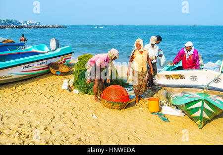 NEGOMBO, SRI LANKA - NOVEMBER 25, 2016: All the catch of the fishing crew fits in one basket, on November 25 in - Stock Photo