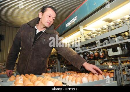Frankfurt, Germany- January 6, 2010 - Farmer inspecting industrial produced eggs in factory - Stock Photo
