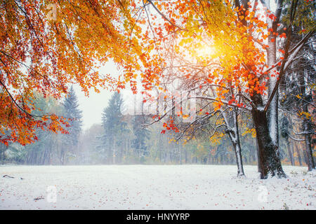 October mountain beech forest with first winter snow. - Stock Photo