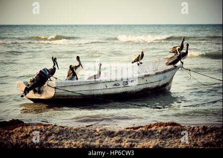 A group of pelicans on a small fishing boat, at sunset in Progreso, Yucatan, Mexico. - Stock Photo