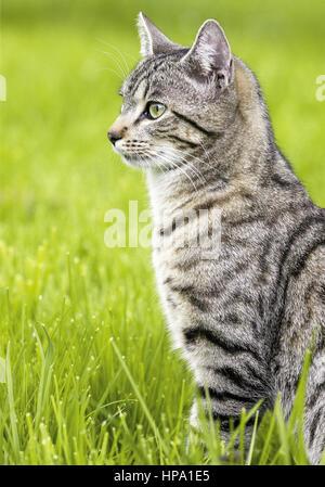 Katze sitzt in Wiese - Stock Photo