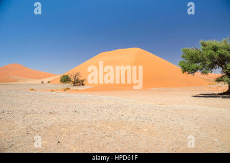 Dune 45, Namib Desert, Namibia. - Stock Photo
