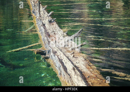 Old floating log, selective focus, color toned image, abstract natural background. - Stock Photo