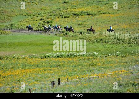 Cowboys, Cowgirls and Rodeo - Stock Photo