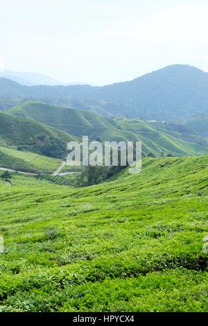Scenic Shot of the Tea Plantations in Cameron Highlands, Pahang, Malaysia - Stock Photo