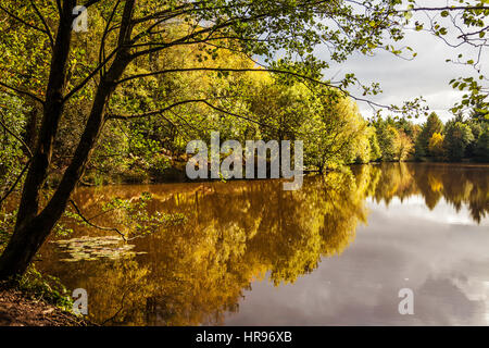 Speech House Lake in the Forest of Dean in Gloucestershire. - Stock Photo