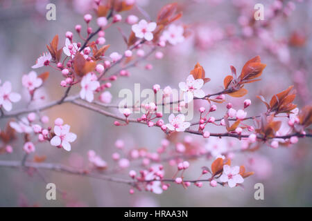 Tree flower blossoms - Stock Photo