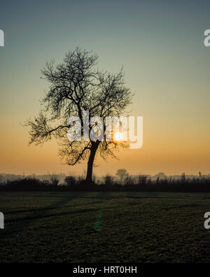 Rushmere St Andrew. Ipswich. England UK.  The sun is close to setting behind a tree on a winter's late afternoon. - Stock Photo