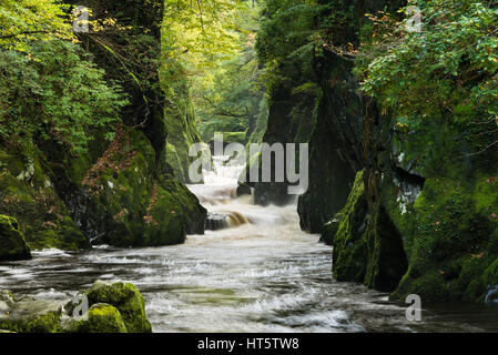 The river Conwy flows through a small canyon called Fairy Glen, Wales - Stock Photo