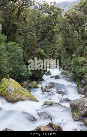 Hollyford Valley, Fiordland National Park, Southland, New Zealand. The foaming waters of Lake Marian Falls tumbling - Stock Photo