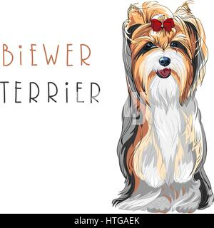 Vector funny Biewer Yorkshire Terrier dog sitting - Stock Photo