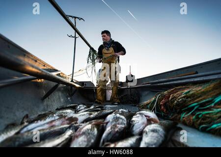 Switzerland, canton of Vaud, Morges, Manu Torrent, professional fisherman to Tolochenaz, opening day of the pike - Stock Photo