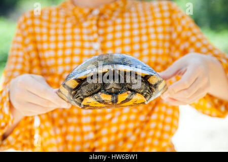Holding a turtle - Stock Photo