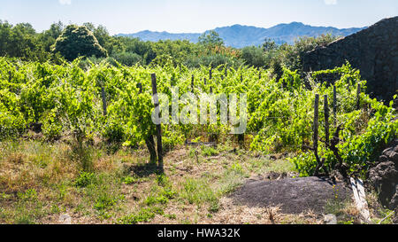 travel to Italy - abandoned vineyard and rural house after volcano Etna eruption in Sicily - Stock Photo