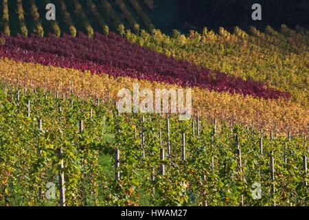 Germany, Baden-Wurttemburg, Black Forest, Gengenbach, hillside vineyards, fall - Stock Photo