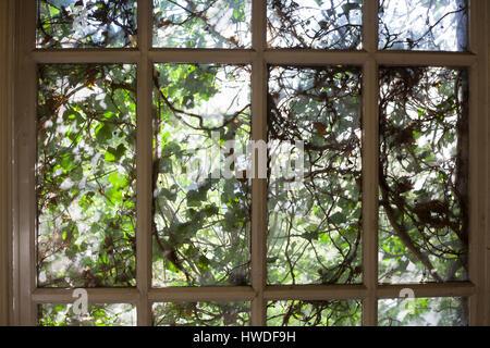 Window covered in ivy, Camberwell, London, 30/04/2016 Katja Heber/Lichtermeer - Stock Photo