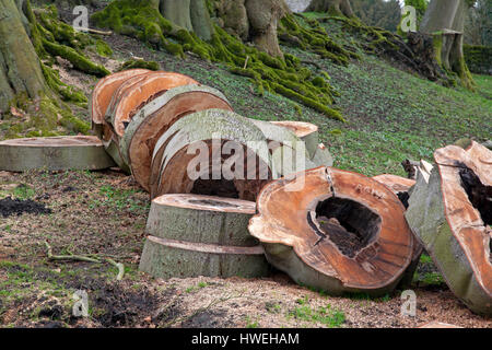 Tree cut into rings in a Derbyshire country garden - Stock Photo